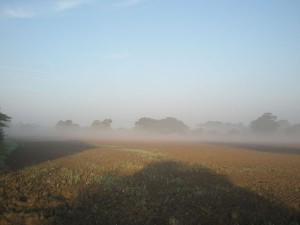 Misty Fields